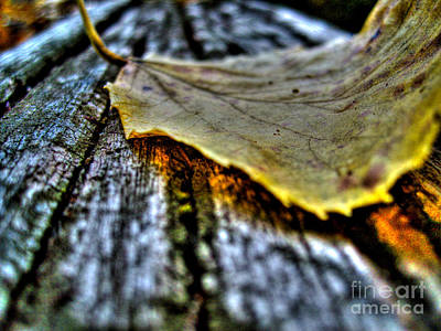 Photograph - Fallen Leaf by Nina Ficur Feenan