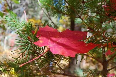 Photograph - Fallen Leaf by Tam Ryan