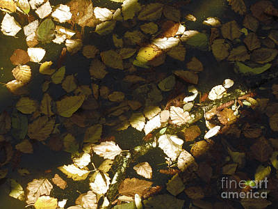 Photograph - Fallen Leaves And Shadow by Donna Brown