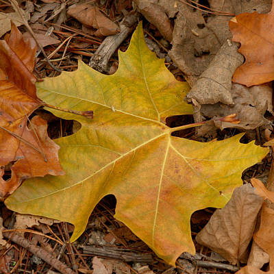 Photograph - Fallen Leaves by Art Block Collections