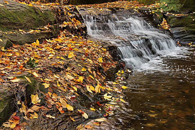 Photograph - Fallen Leaves At A Waterfall by Theo OConnor