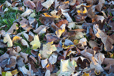 Fallen Leaf Digital Art - Fallen Leaves by Bill Cannon