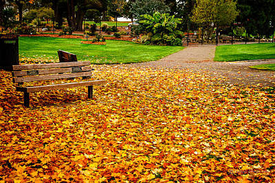 Photograph - Fallen Leaves by Cassius Johnson