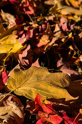 Photograph - Fallen Leaves by Deb Buchanan