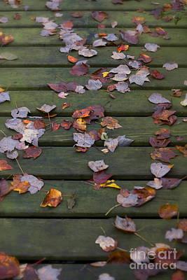Fallen Leafs Photograph - Fallen Leaves by Diane Diederich