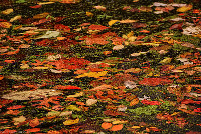 Photograph - Fallen Leaves I by Kathi Isserman