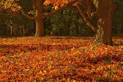Photograph - Fallen Leaves IIi by Kathi Isserman