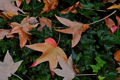 Photograph - Fallen Leaves In Autumn by Kirsten Giving
