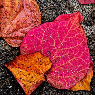 Photograph - Fallen Leaves by Mary Jo Allen