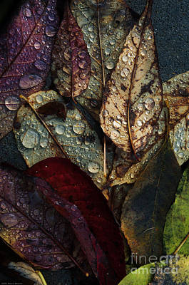 Fallen Leaf Photograph - Fallen Leaves by Mary Machare