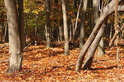 Photograph - Fallen Leaves by Michael Porchik