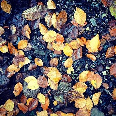 Surface Photograph - Fallen Leaves by Nic Squirrell