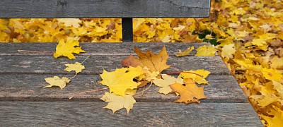 Fallen Leaf Photograph - Fallen Leaves On A Wooden Bench by Panoramic Images
