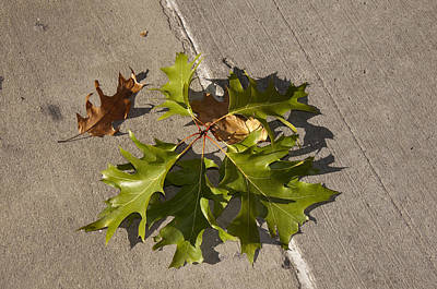 Photograph - Fallen Leaves On City Streets by Brenda Kean