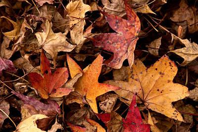 Photograph - Fallen Leaves by Rebecca Davis