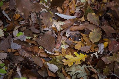 Photograph - Fallen Leaves by Ryan Heffron