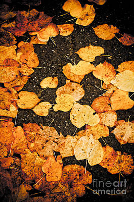 Photograph - Fallen Leaves by Silvia Ganora