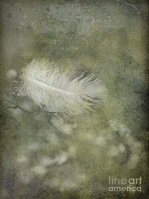 Photograph - Fallen by Liz  Alderdice