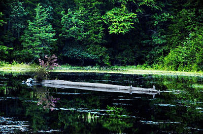 Fallen Log In A Lake Art Print by Bill Cannon