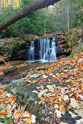 Photograph - Fallen Log Over Hidden Falls by Alan Lenk
