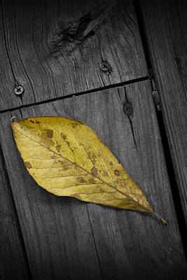 Photograph - Fallen Magnolia Leaf On A Gray Deck by Randall Nyhof