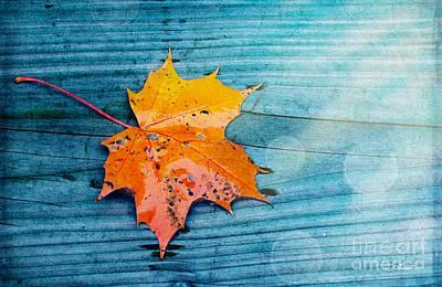 Photograph - Fallen Off by Jutta Maria Pusl
