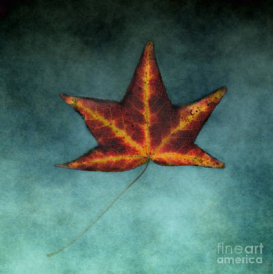 Photograph - Fallen Orange Leaf by Jai Johnson