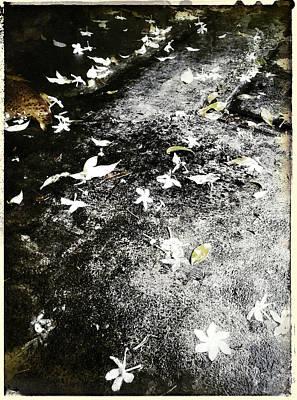 Photograph - Fallen Petals by Yen