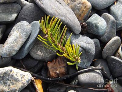 Brigitte Photograph - Fallen Pine Needle by Brigitte Emme