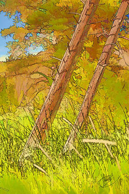 Fallen Pines Art Print