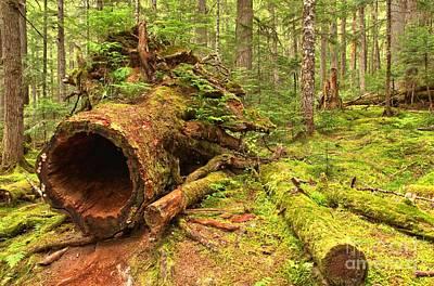 Photograph - Fallen Rainforest Giant by Adam Jewell