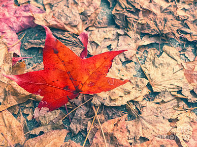 Photograph - Fallen Red Leaf by Silvia Ganora