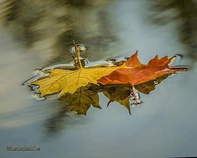 Foliage Photograph - Fallen Reflections by LeeAnn McLaneGoetz McLaneGoetzStudioLLCcom