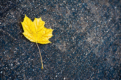 Autumn Leaf Photograph - Fallen by Sebastian Musial