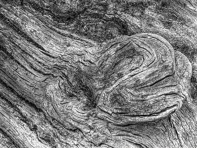 Woodland Trail Photograph - Fallen Tree Bark Bw by Gill Billington