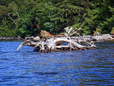 Fallen Tree In A Lake Art Print