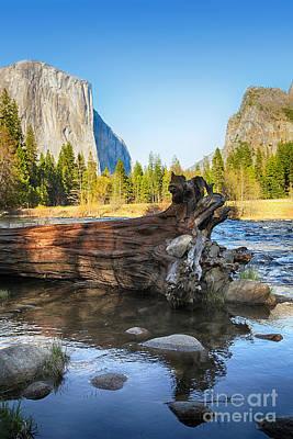 Dead Valley Photograph - Fallen Tree In Merced River by Jane Rix