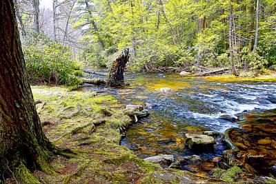 Fallen Tree In Stream Pocono Mountains Art Print