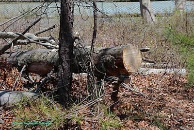 Photograph - Fallen Tree by Nance Larson