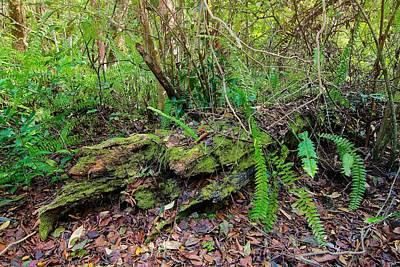 Photograph - Fallen Tree by Rudy Umans