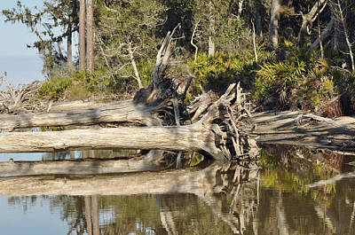 Fallen Trees Reflected In A Beach Tidal Pool Art Print