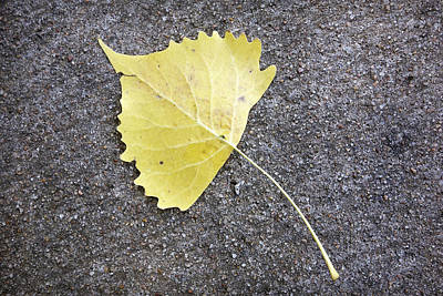 Photograph - Fallen Yellow Leaf  by Ann Powell