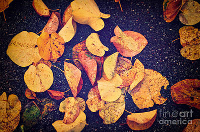 Photograph - Fallen Yellow Leaves by Silvia Ganora
