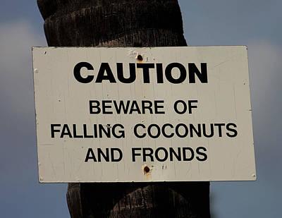 Photograph - Falling Coconuts by Pamela Walton