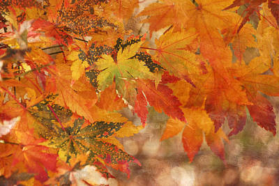Falling Colors I Art Print