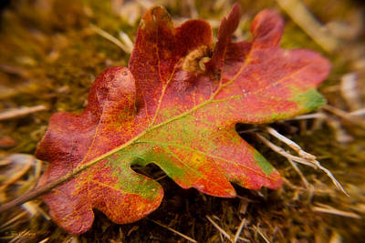 Photograph - Falling For Autumn by Tyra  OBryant