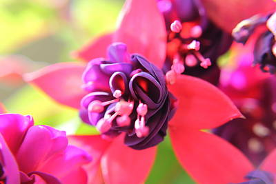 Photograph - Falling In Fuchsia by Sarah Boyd