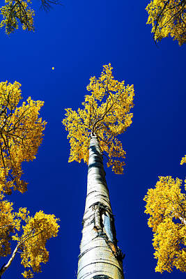 Aspen Tree Photograph - Falling Leaf by Chad Dutson