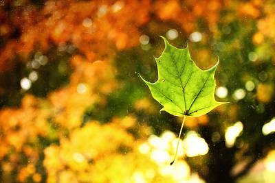 Photograph - Falling Leaf by Lars Lentz