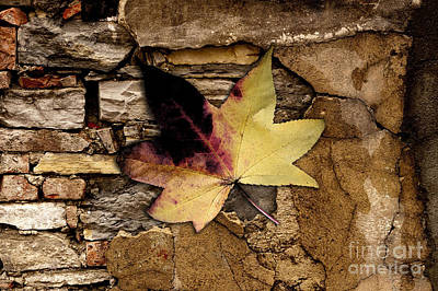 Falling Leaf Painting Art Print by Marvin Blaine